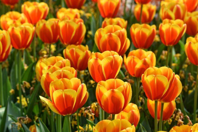 o que o sol faz com as flores pdf